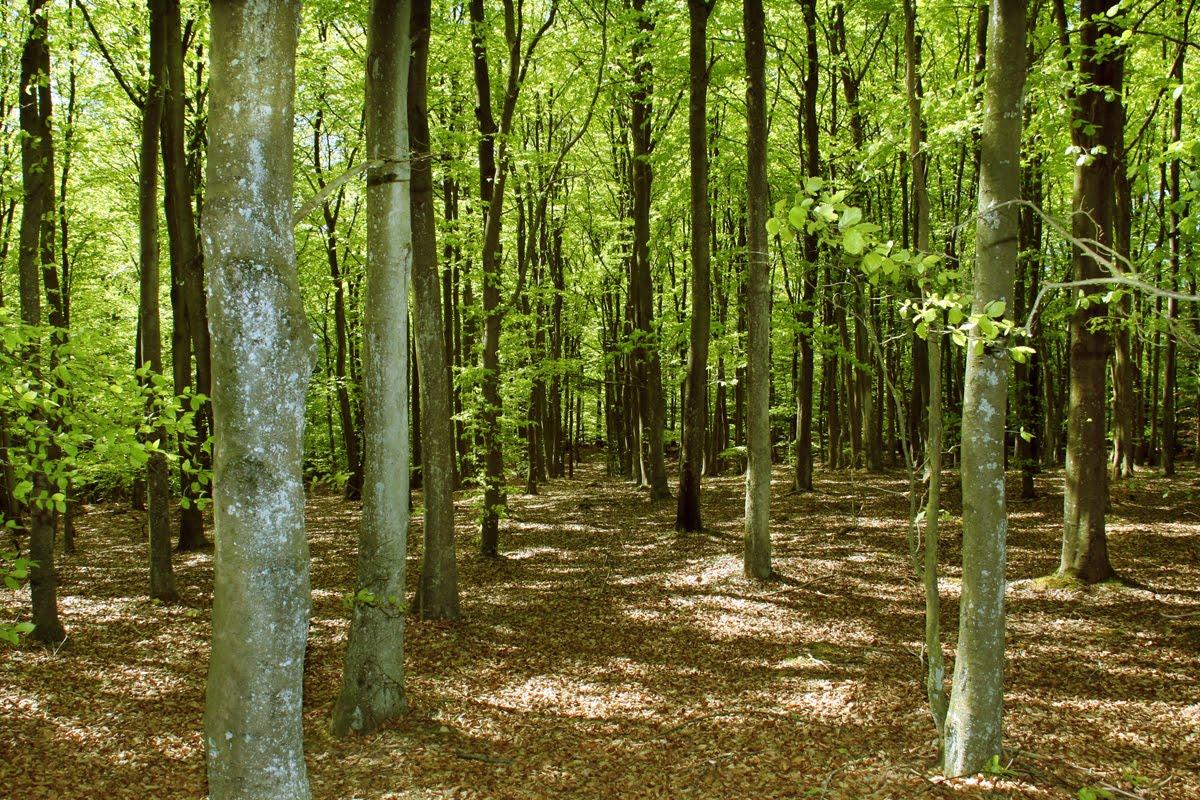 Søndag var også skovens dag men det var nu ikke