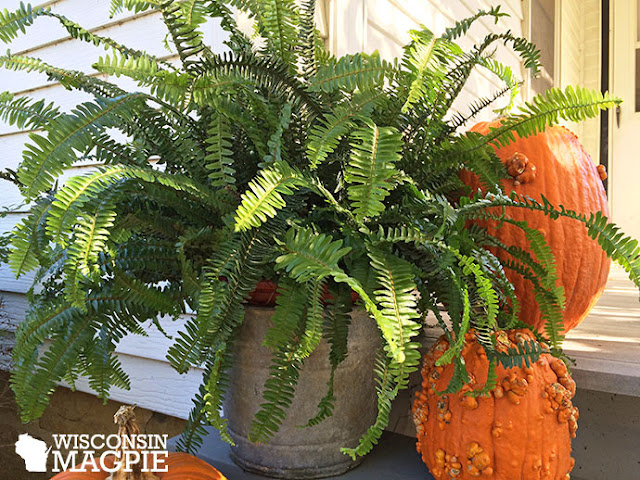 fern on porch with pumpkins