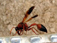 Hornet, Attack, Hospital, Kuttikol, Kasaragod, Kerala, Malayalam news, Kasargod Vartha, Malayalam news, Kerala News, International News, National News, Gulf News, Health News, Educational News, Business News, Stock news, Gold News