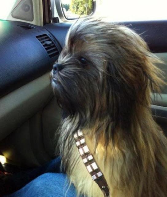 Long haired chewbacca dog dog image