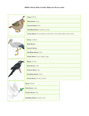 General English For All World Of BIRDs Picturesque
