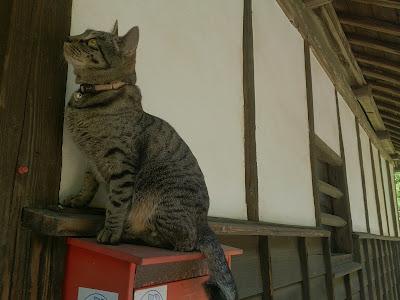 郵便受けの上の猫