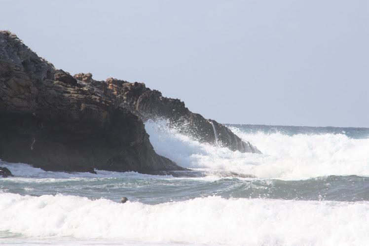 El rugir del mar... el rugir de la vida