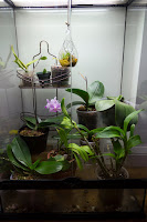 My orchid growing area