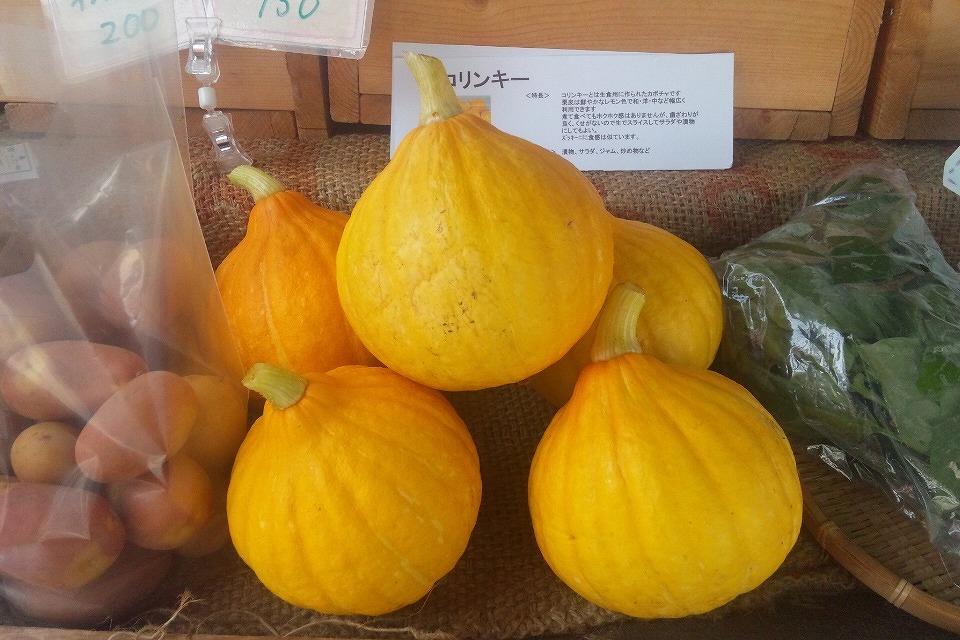 真ん中に写っている丸く黄色い可愛らしい野菜がコリンキー