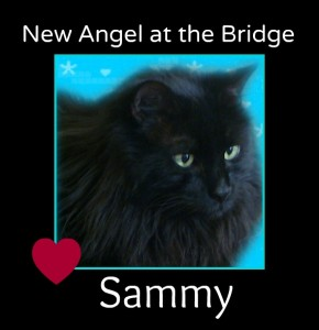 Sammy