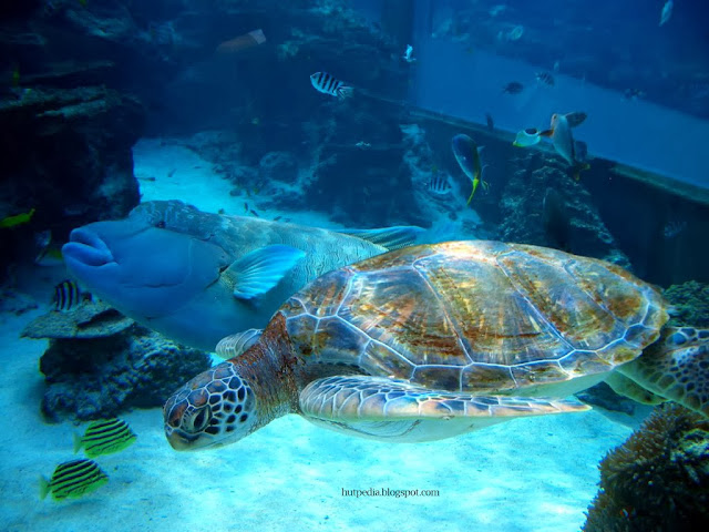 World Largest Aquarium Tank Kuroshio Sea