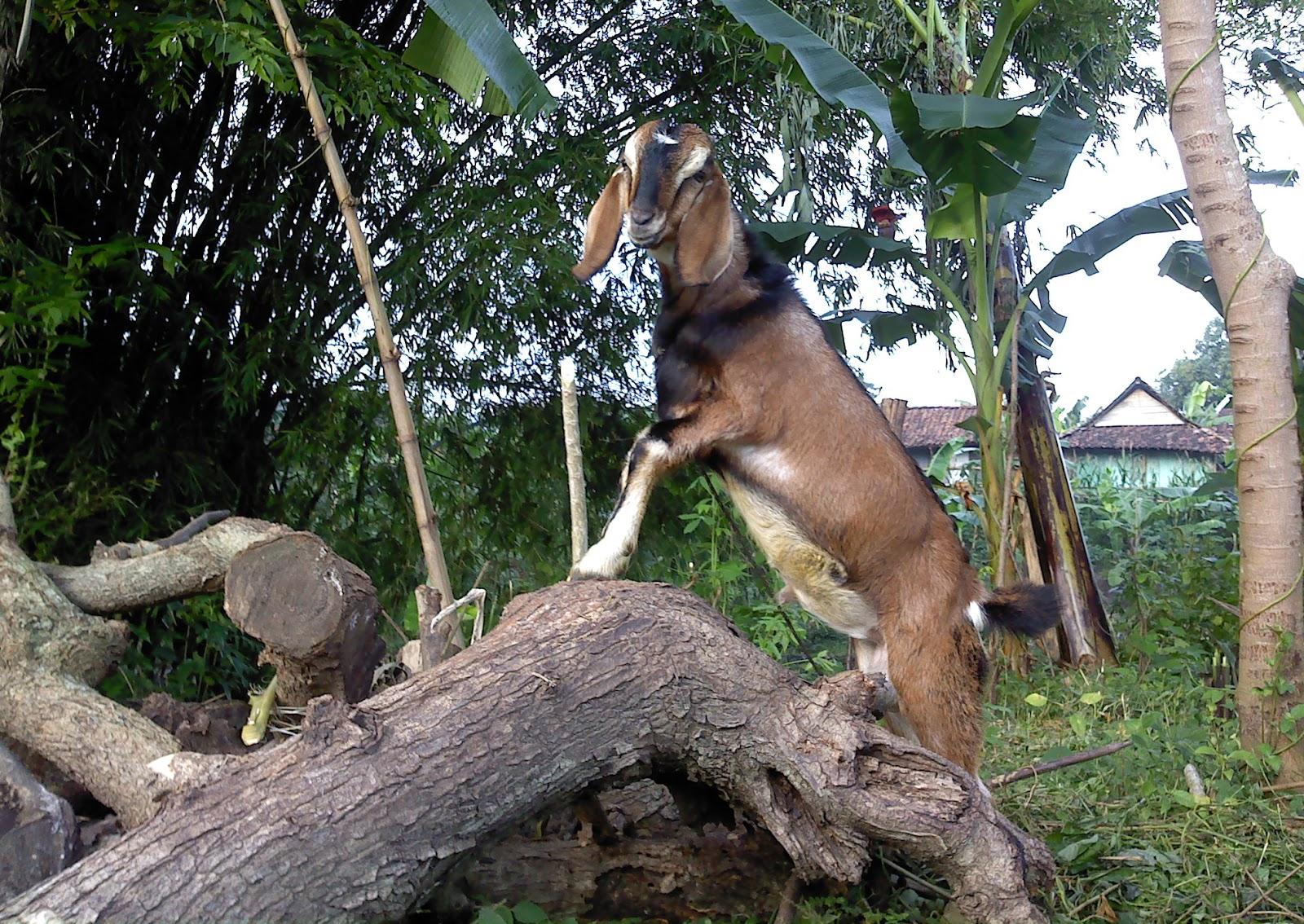 Amazing animal