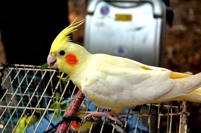 5 Keunggulan Memelihara Burung