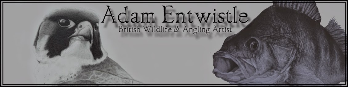 Adam Entwistle British Wildlife+Angling Artist