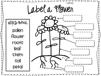 Classroom Freebies Too: Label a Flower
