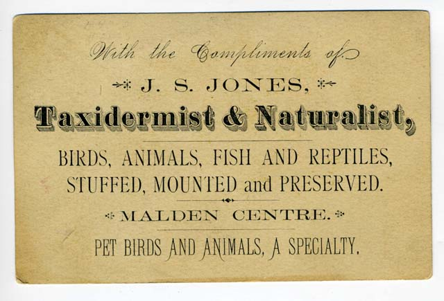 The Victorian Times Calling Cards