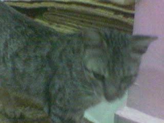 Kucing Kejut aku Solat Subuh....