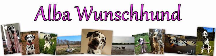 Alba Wunschhund