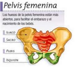 dolor en la pelvis en el embarazo: