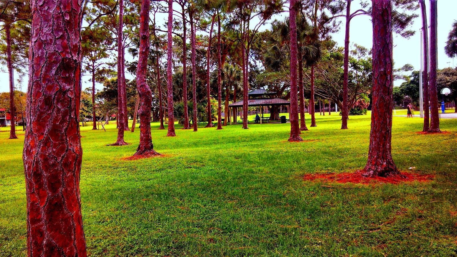 Palm Beaches Blogger: PGA National Park in Palm Beach Gardens, FL 33418