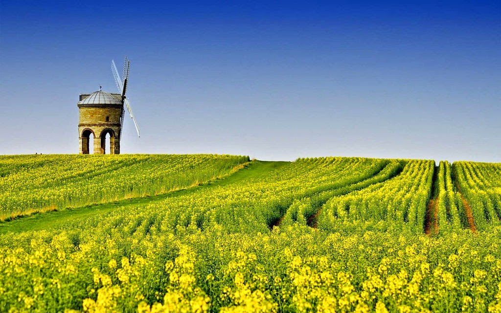 hình nền cánh đồng hoa