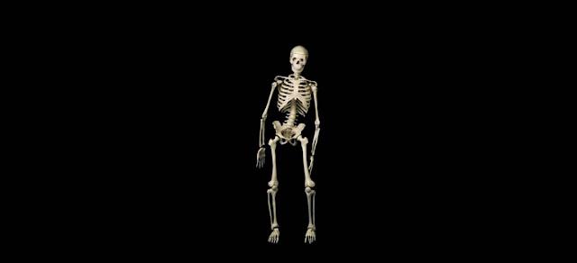 Esqueleto y aparato locomotor