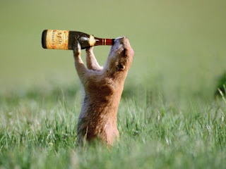 funny animal drunker