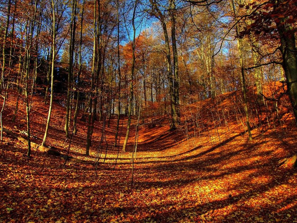 http://4.bp.blogspot.com/-AunOyumuNqo/UJJgaGY43fI/AAAAAAAABOI/kr6xub1j5g0/s1600/Autumn-Wallpaper-3.jpeg