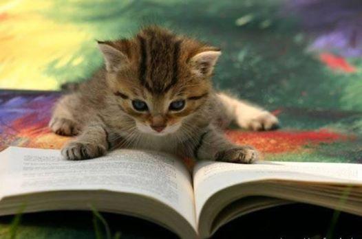 Foto Kucing Lucu Imut dan Menggemaskan 08