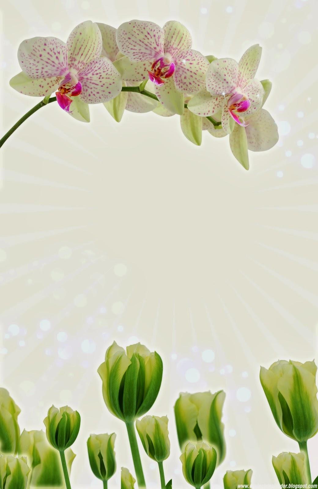 Arreglo Floral Imágenes De Archivo, Vectores 123RF - Imagenes De Flores Orquideas Y Tulipanes