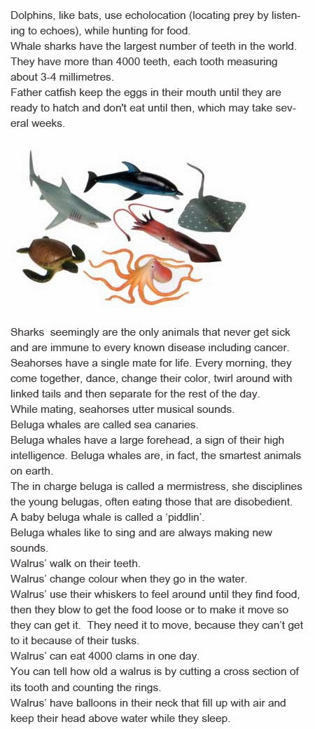 Ocean animal facts for kids