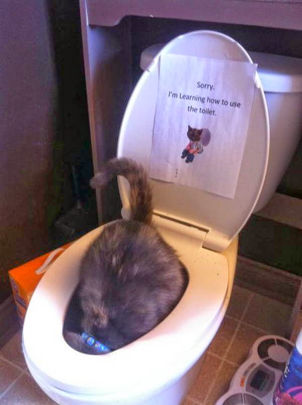 Funny cats - part 96 (40 pics + 10 gifs), cat pictures, cat inside toilet bowl
