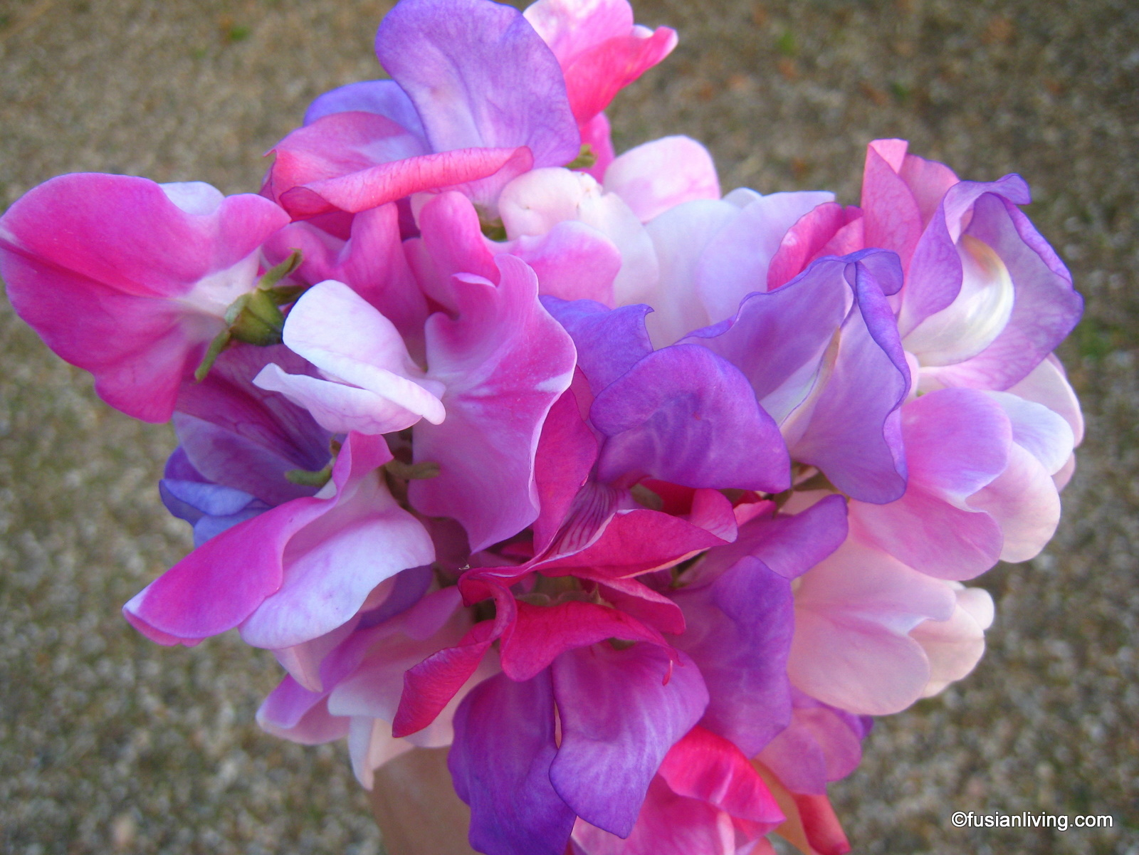 A Pretty Sweet Pea Posy From Our Garden Grow Your Own Veg Blog