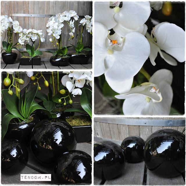 Black & White, czyli magiczna moc kontrastów