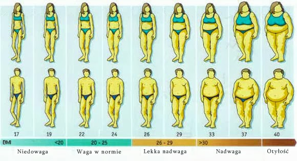 откладывается жир на животе причины