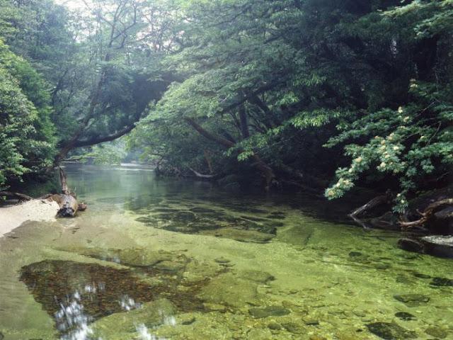 Keindahan Hutan Di Pulau Yakushima Jepun Warna Warna Hidup