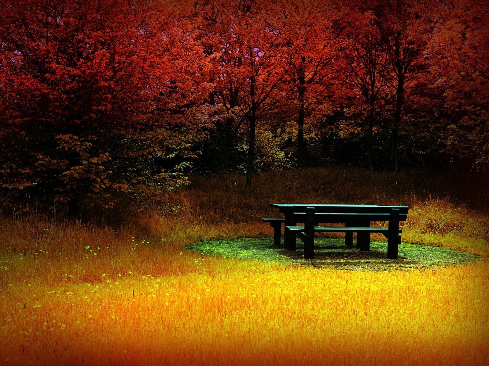 http://4.bp.blogspot.com/-AwZnjPHw70I/Tndi1MkQZ5I/AAAAAAAAG1U/k7z56OjV83Y/s1600/autumn+wallpaper2.jpg