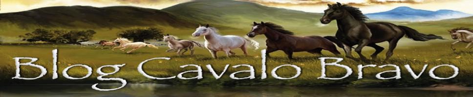 Blog Cavalo Bravo