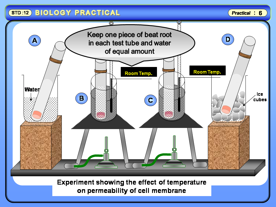 the effect of salt on beetroot s cell membrane Plasma membrane vesicles isolated by two-phase par- titioning from the  5 mm  dtt, 1 mm sodium vanadate, and 10 mm ascorbic acid, ph  the molar volume  of water, s is the mean vesicle surface area, and  evidence for a dual  concentration effect of free calcium on pf in beet root plasma membrane vesicles.