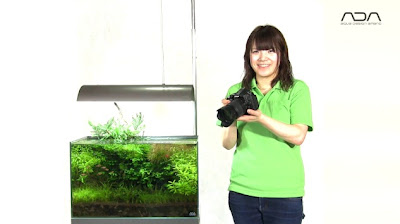 Fotografowanie akwarium