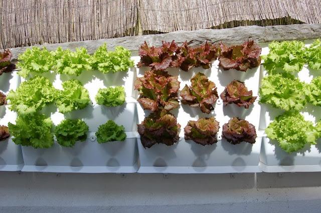mini jardins verticais : mini jardins verticais:São jardins verticais,ou mini quintas urbanas na sua cozinha.