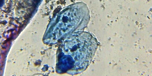 Nucleo y biologia celular