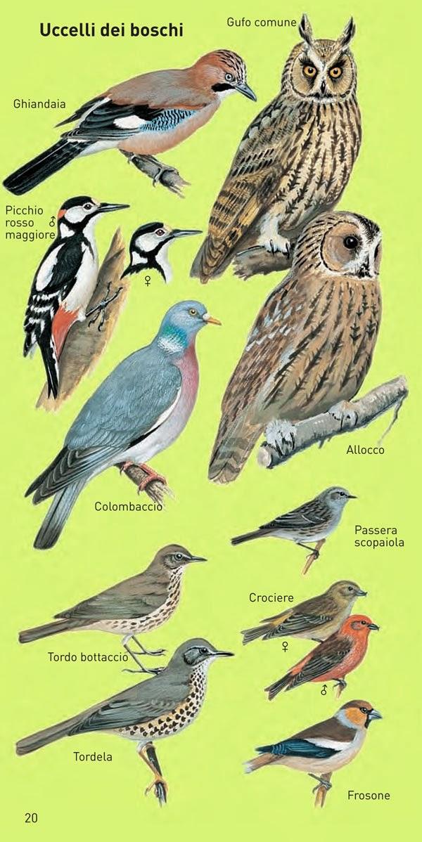 Il mondo in un giardino come riconoscere gli uccelli dei for Cucinare nei vari dialetti italiani