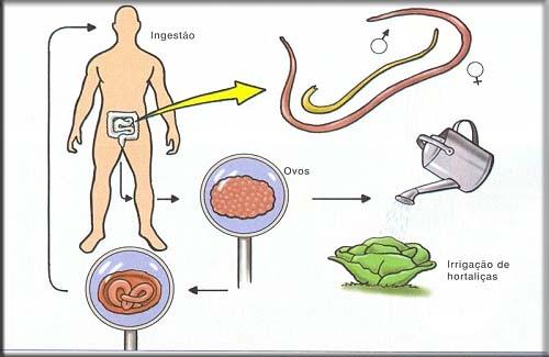 Que sintomas em gatinhos quando vermes