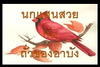 นกแสนสวย กับ ถั่วของอาบัง