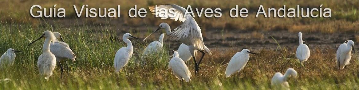 Guía Visual de las Aves de Andalucía