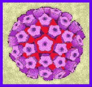 Virus papiloma humano - verrugas y condilomas
