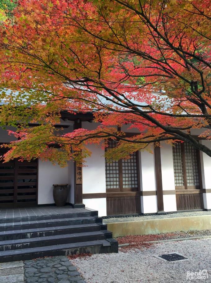 Momiji au Nomiyama Kannon