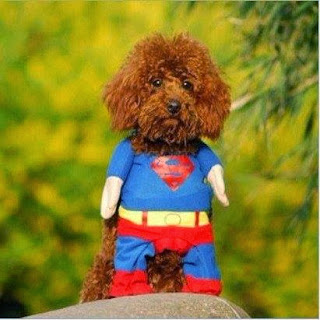 Superman puppet/dog image