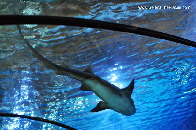 Shark Oceanium Biljdorp Zoo Rotterdam