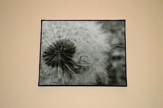 (Dandelion Seed is a Copyright photo from Lifelooklens, 2014.)  Please respect artist's  (specifically, my) rights, my friends...  I know it's easy to get without paying, but please be good little shoppers, will ya?) :) I knew I could trust you guys... :)