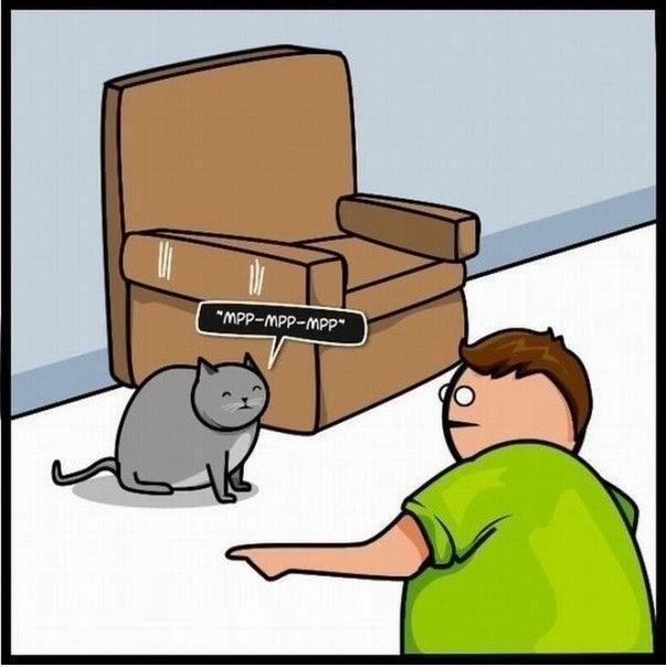 Как кот может привлечь внимание к себе
