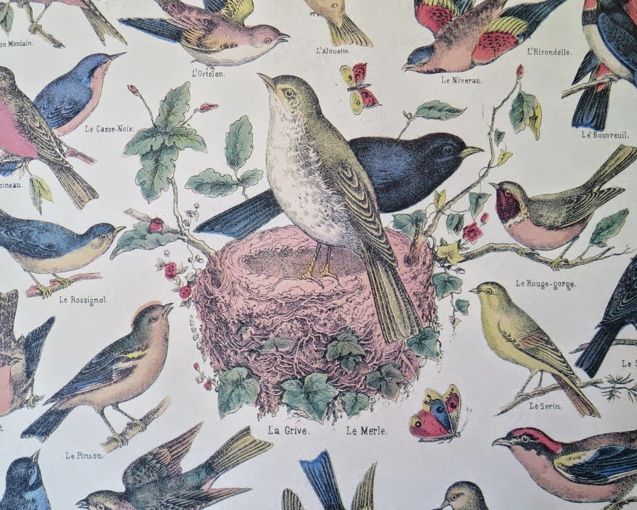 https://www.etsy.com/listing/187301730/vintage-style-french-oiseaux-bird