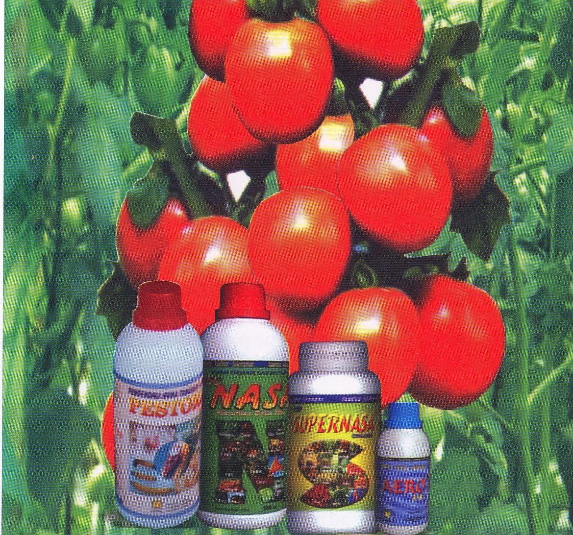 cara-budidaya-tomat-dengan-produk-nasa